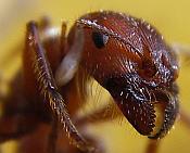 Ant micro 2