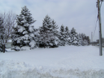 winter-12-11-b