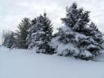 winter-12-11-c