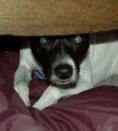 scared dog 1