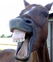 laughing-2
