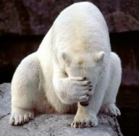 face-palm-polar-bear